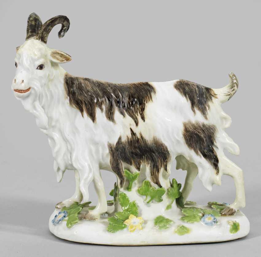 Goat - photo 1