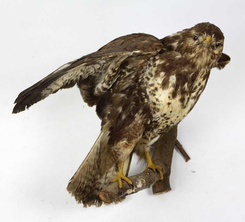 Bird of prey - photo 1