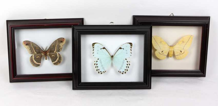 3 butterflies in the frame - photo 1