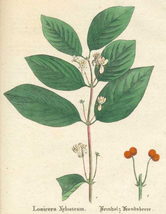 Figure - photo 1