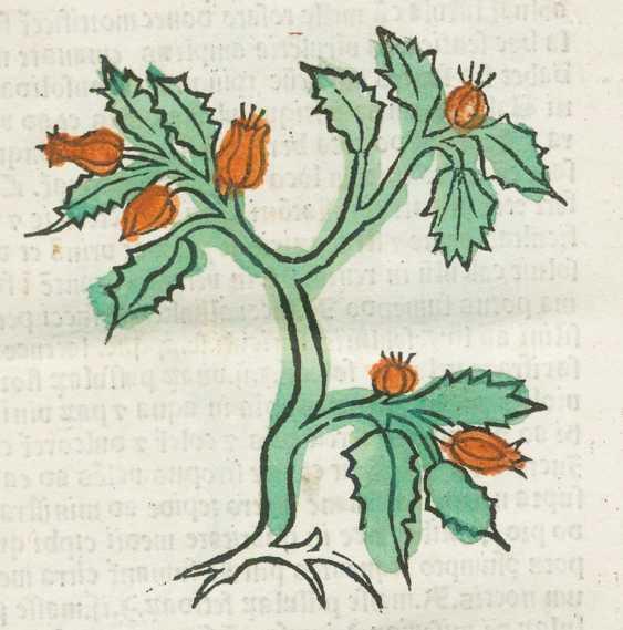 Herbarius often Pataviae. - photo 1