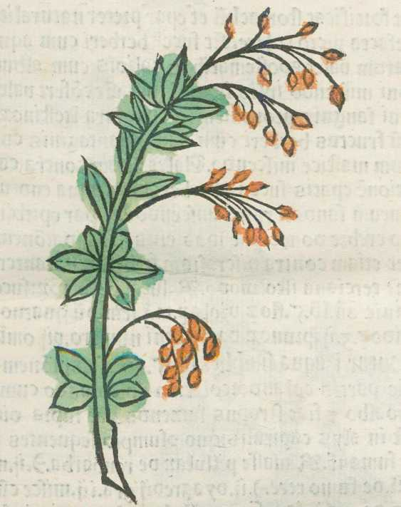 Herbarius often Pataviae. - photo 2