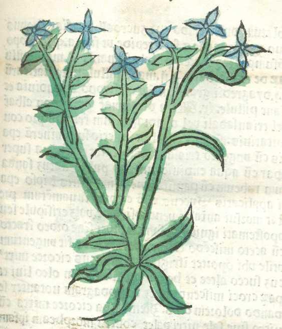 Herbarius often Pataviae. - photo 3