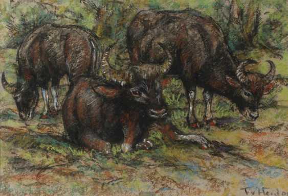 Fritz von Heider, water Buffalo - photo 1