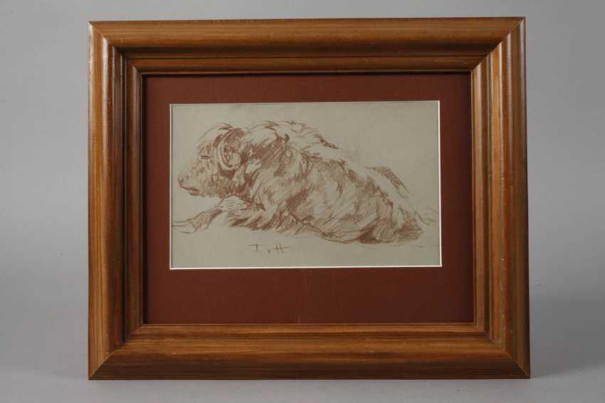 Fritz von Heider, bison - photo 2