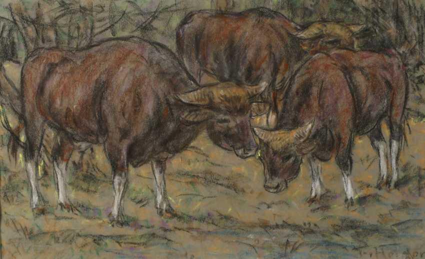Fritz von Heider, cattle - photo 1