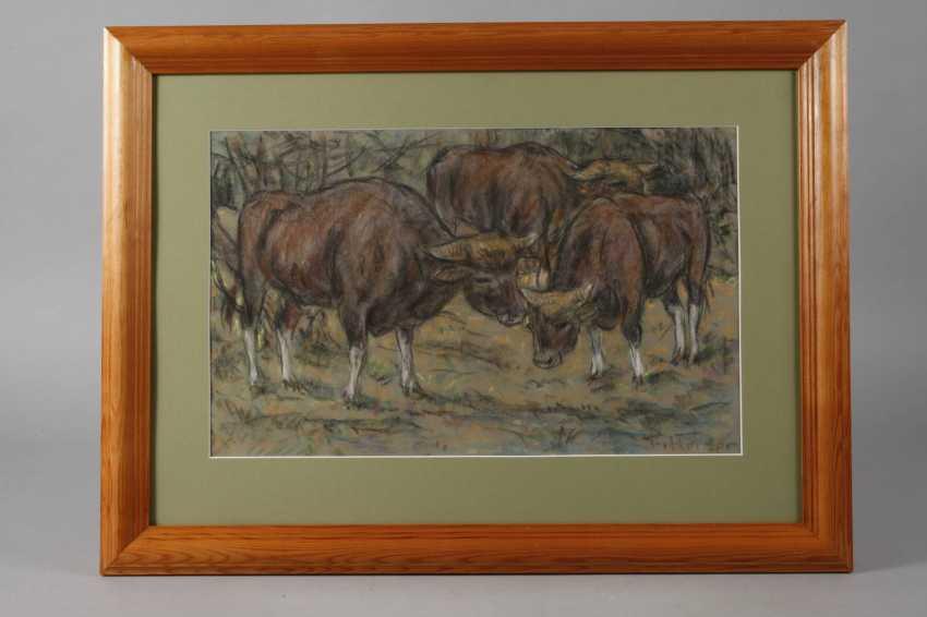 Fritz von Heider, cattle - photo 2