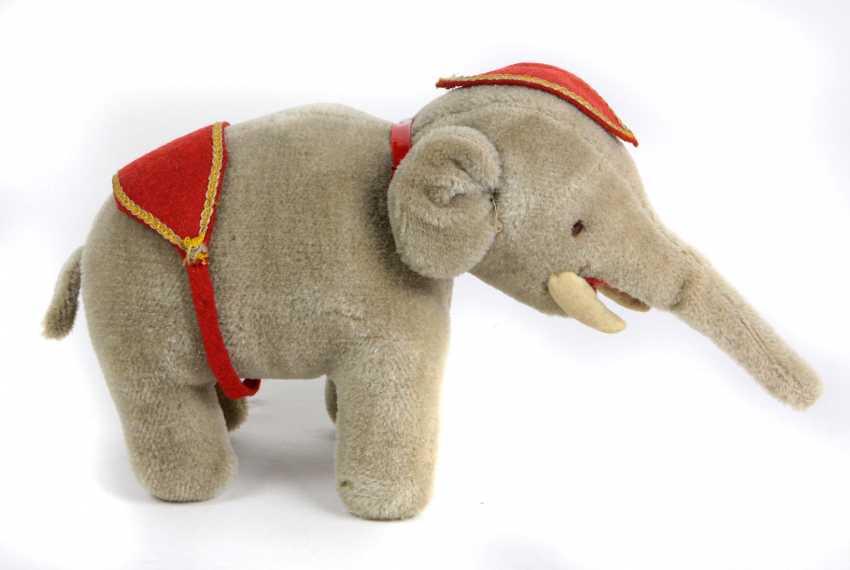 Elefant - Foto 1