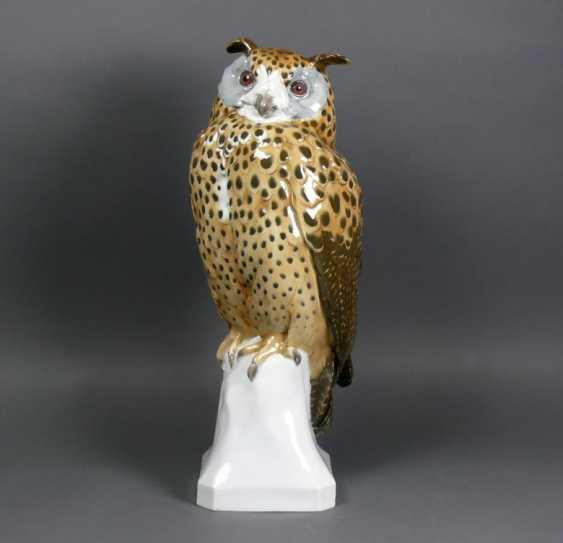 Owl - photo 1