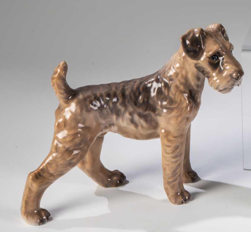 Terrier - photo 1