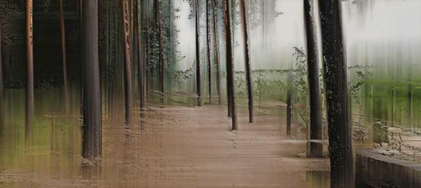 Wild, Sabine - Wood_8044 - Foto 1