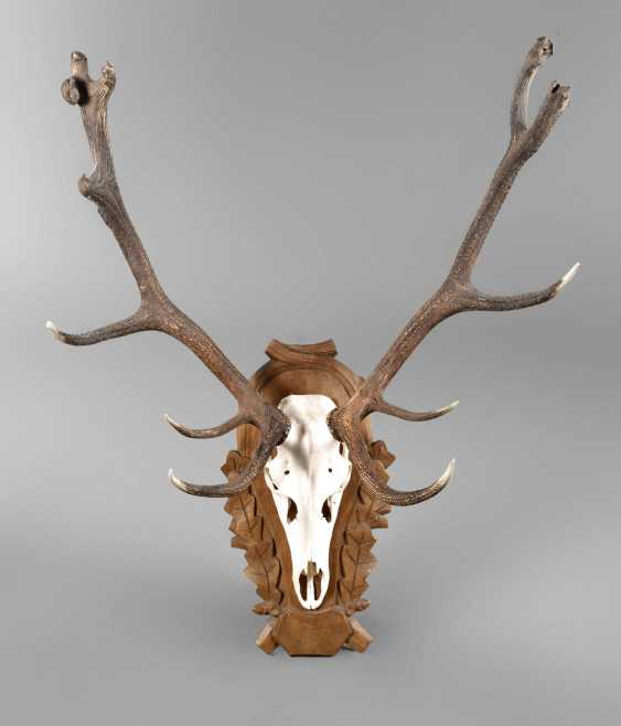 Large Hunting Trophy - photo 1