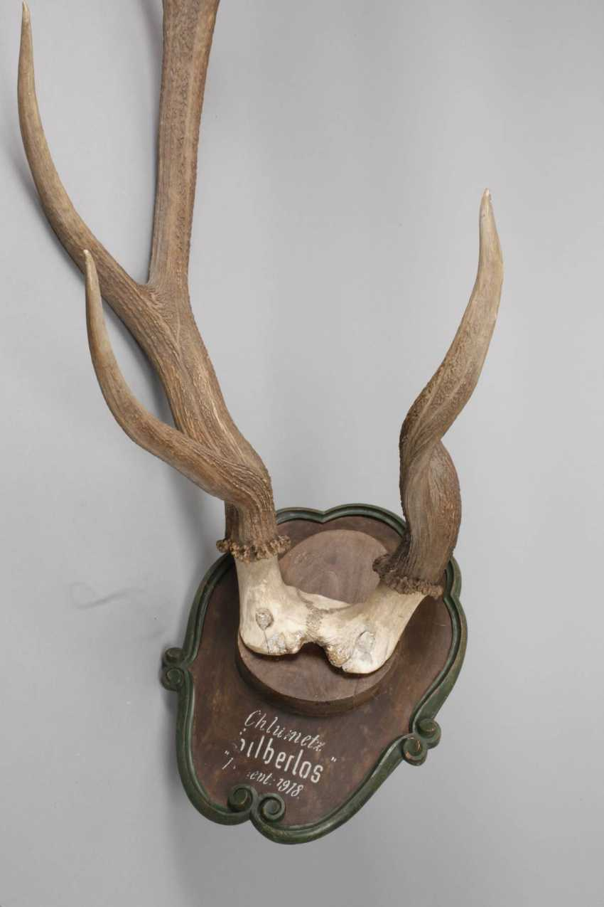 Large Hunting Trophy - photo 2