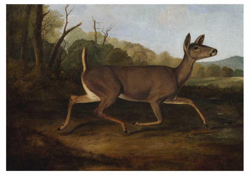 John Woodhouse Audubon (1812-1862) - photo 1