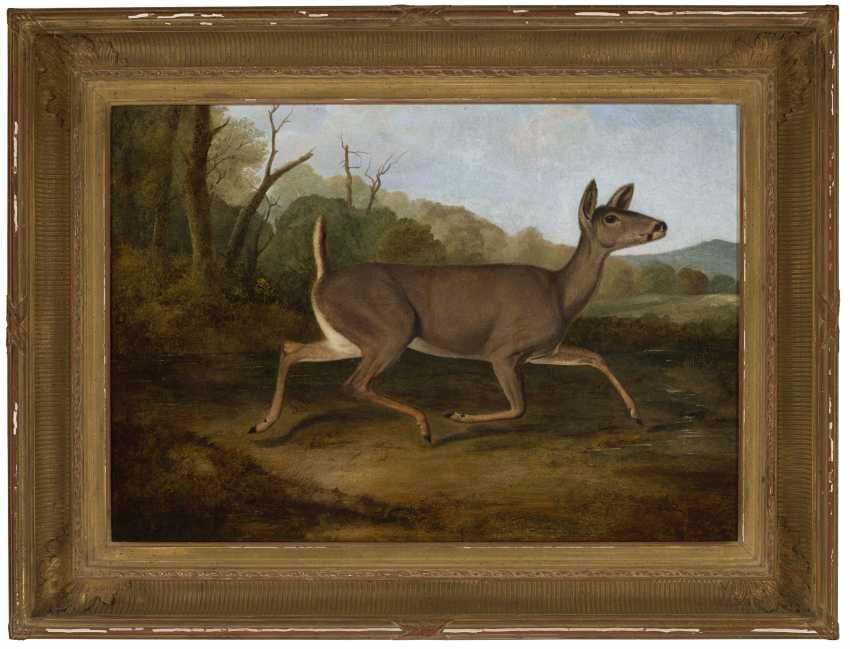 John Woodhouse Audubon (1812-1862) - photo 2