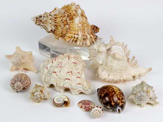 10 shells - photo 1