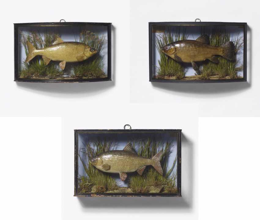 Three panorama boxes with fish - photo 1