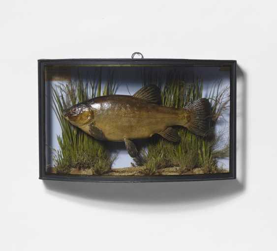 Three panorama boxes with fish - photo 2