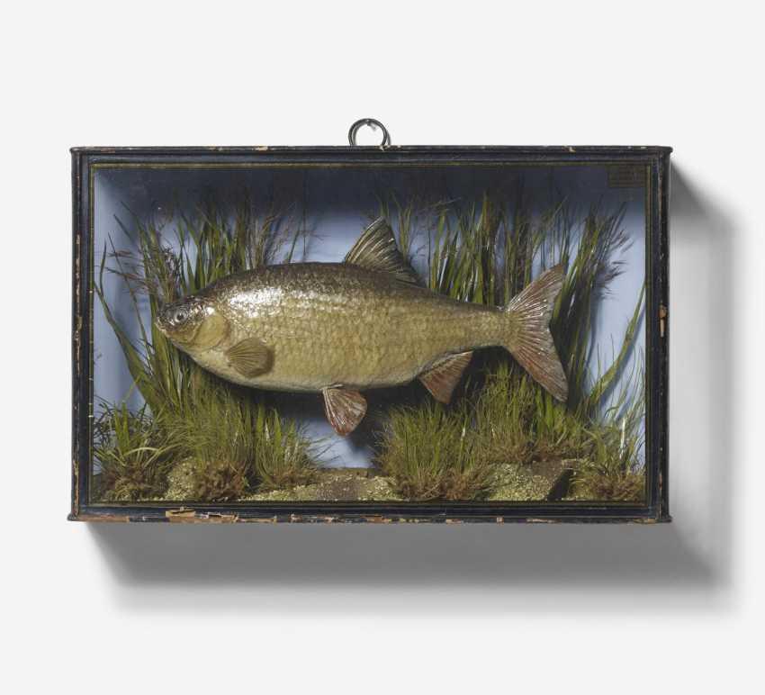 Three panorama boxes with fish - photo 3