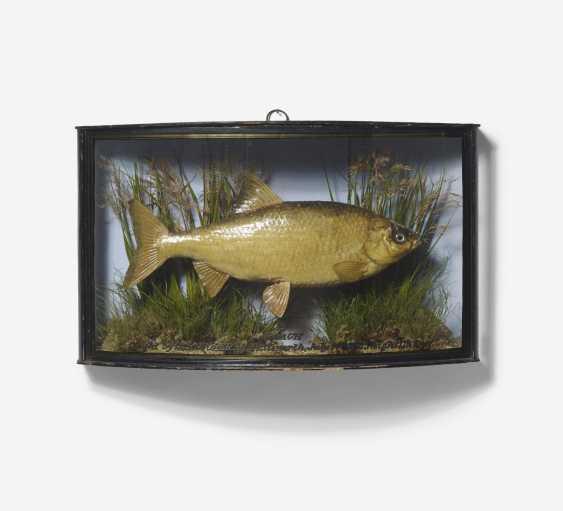 Three panorama boxes with fish - photo 4