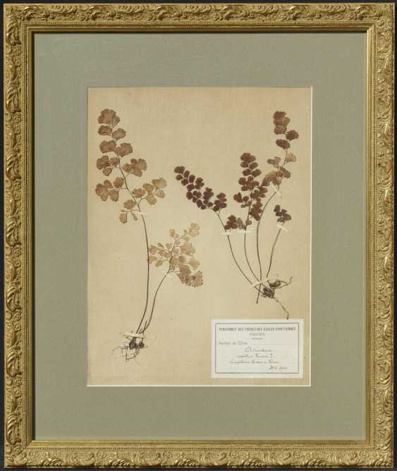 Eight frames with pressed plants - photo 23