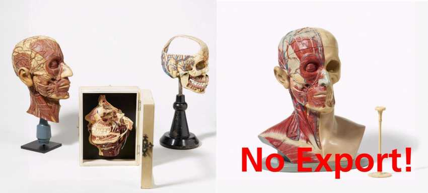 Stethoscope and four anatomical models of the head - photo 1