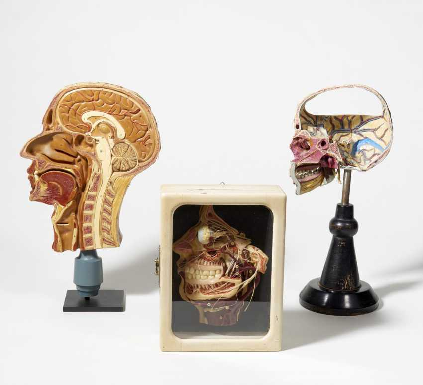 Stethoscope and four anatomical models of the head - photo 2