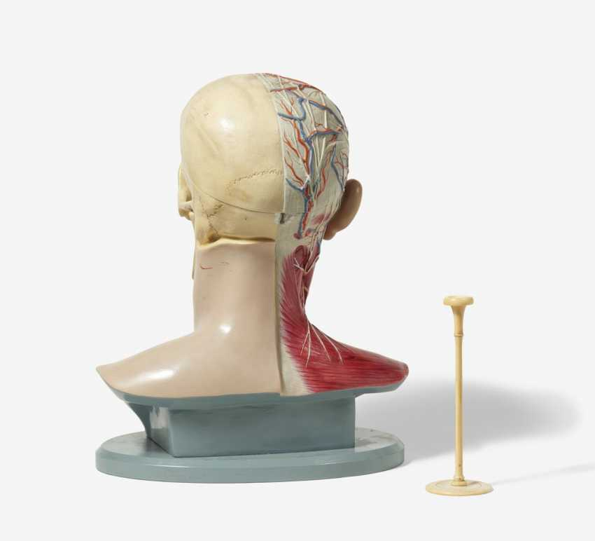 Stethoscope and four anatomical models of the head - photo 4