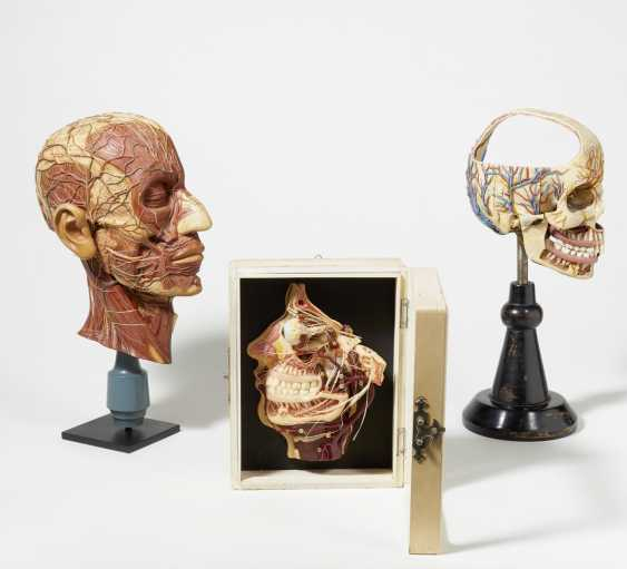 Stethoscope and four anatomical models of the head - photo 5