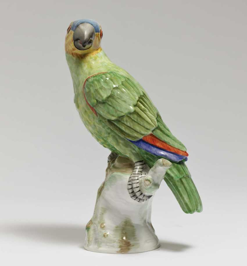 Parrot sitting on branch - photo 1