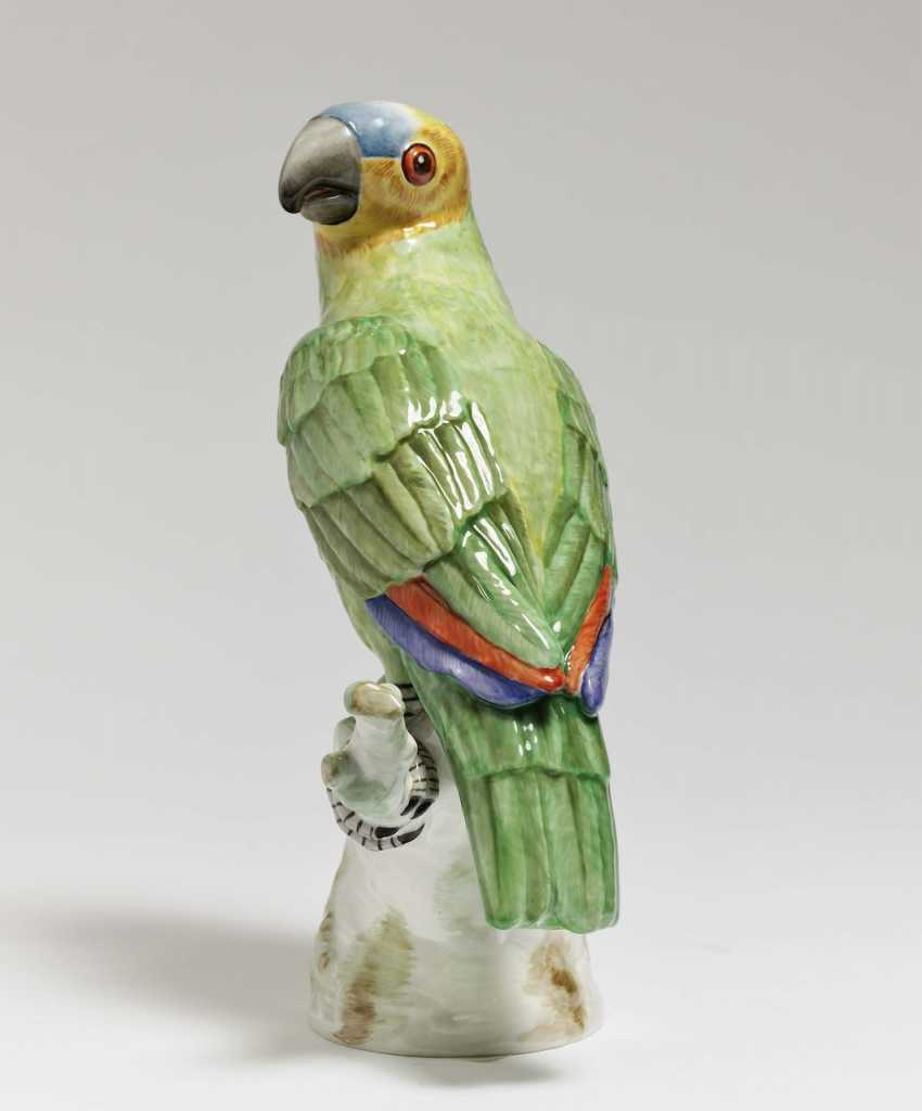 Parrot sitting on branch - photo 2