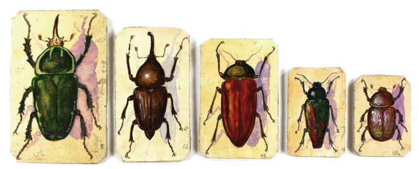 Beetle. - photo 1
