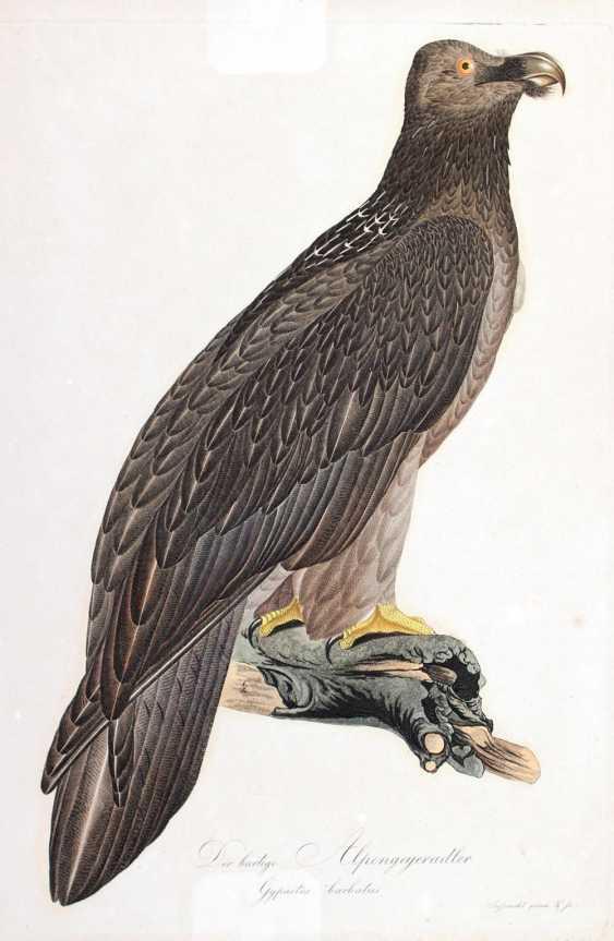 Adler. - photo 1
