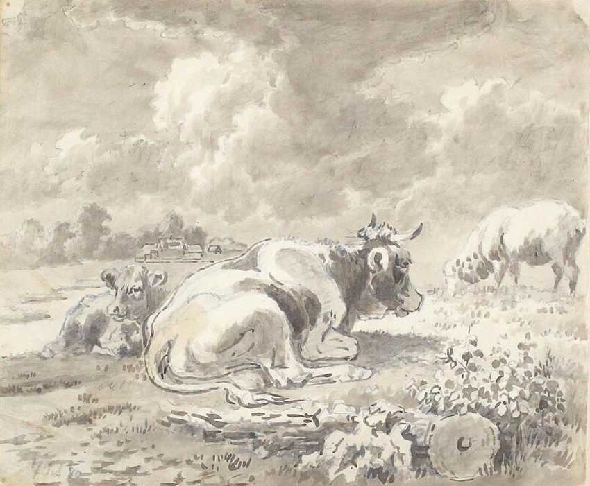 Cow lying down - photo 1
