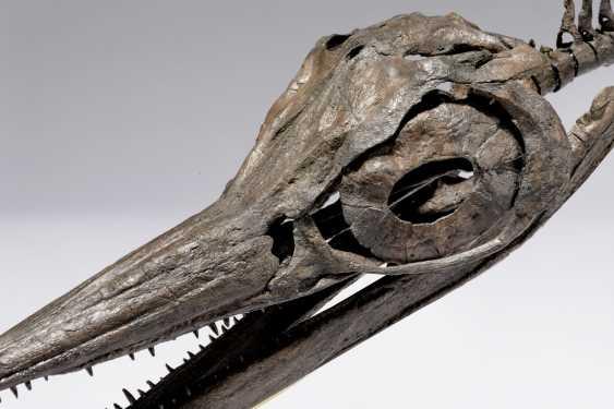 A FOSSIL ICHTHYOSAUR SKULL - photo 4
