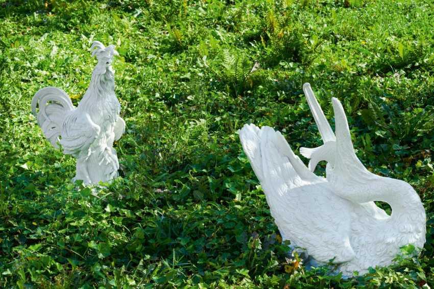 Big Paduan Rooster - photo 2