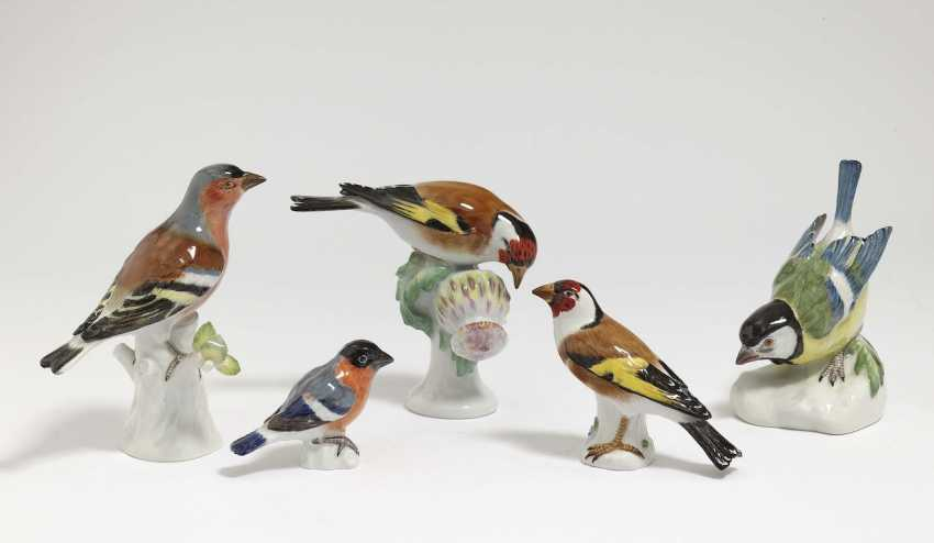 Five songbirds - two goldfinches, chaffinch, blue tit and bullfinch Meissen - photo 1