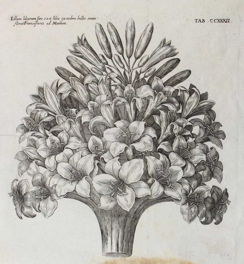 Lilies, daffodils, etc. Hyacinths. - photo 1