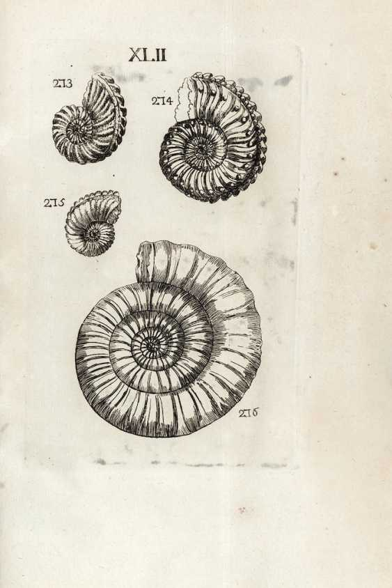 BOURGUET, Louis (1678-1742) - CARTIER, Pierre - Traité des petrifications avec figures. Paris: Briasson, 1742.  - photo 1