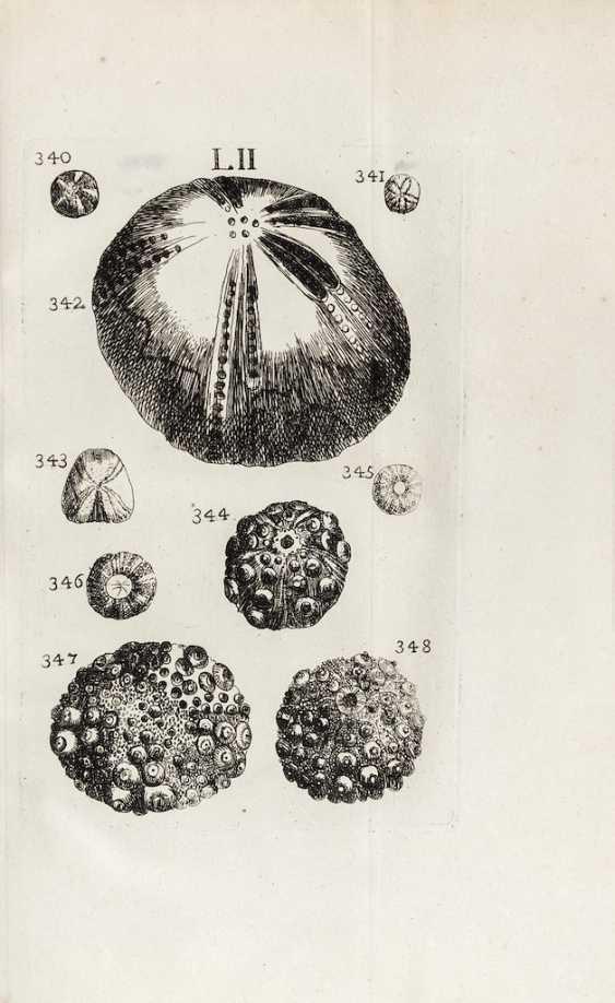 BOURGUET, Louis (1678-1742) - CARTIER, Pierre - Traité des petrifications avec figures. Paris: Briasson, 1742.  - photo 2