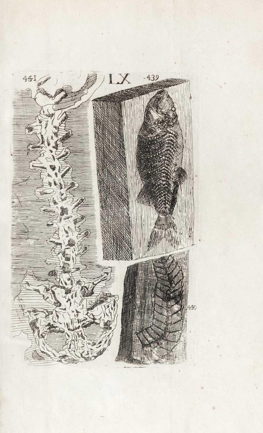 BOURGUET, Louis (1678-1742) - CARTIER, Pierre - Traité des petrifications avec figures. Paris: Briasson, 1742.  - photo 3