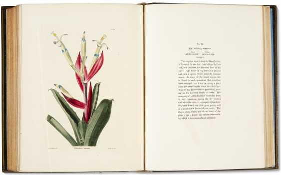 The Botanical Cabinet   - photo 1