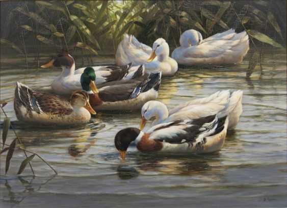 Seven ducks - photo 1