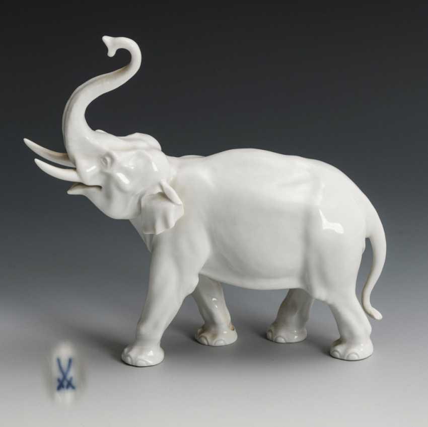 Elefant - photo 1