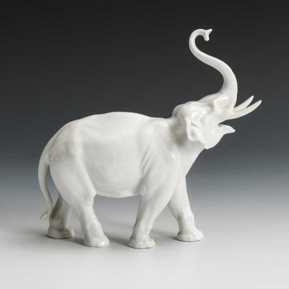 Elefant - photo 2