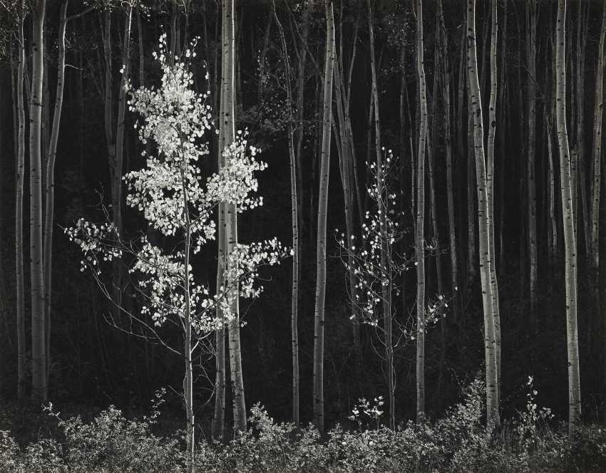 ANSEL ADAMS (1902–1984) - photo 1
