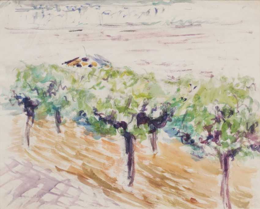 Fruit trees - photo 1
