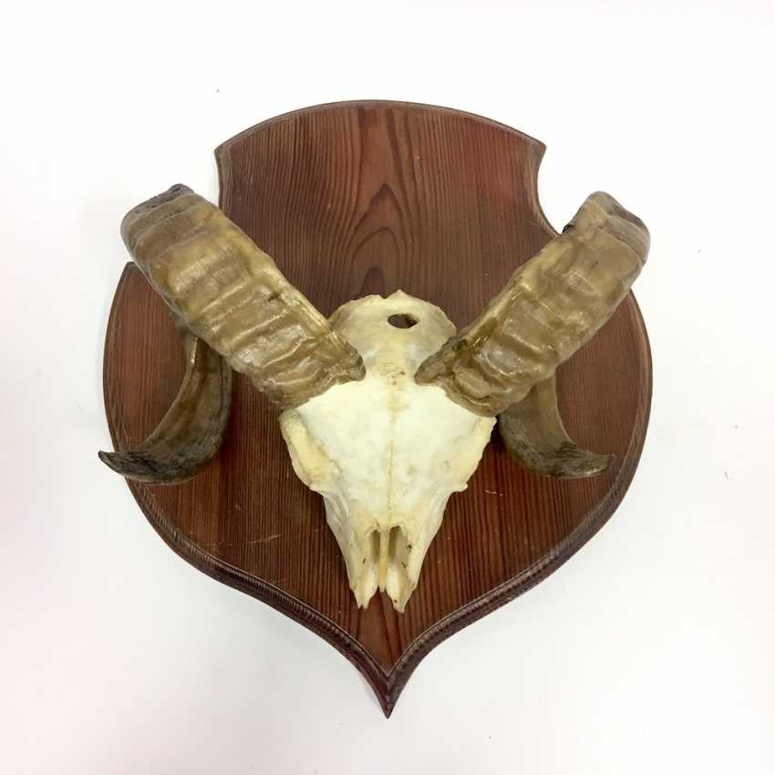 Lot de 5 plaques /à troph/ée de chasse avec 5 pinces de fixation