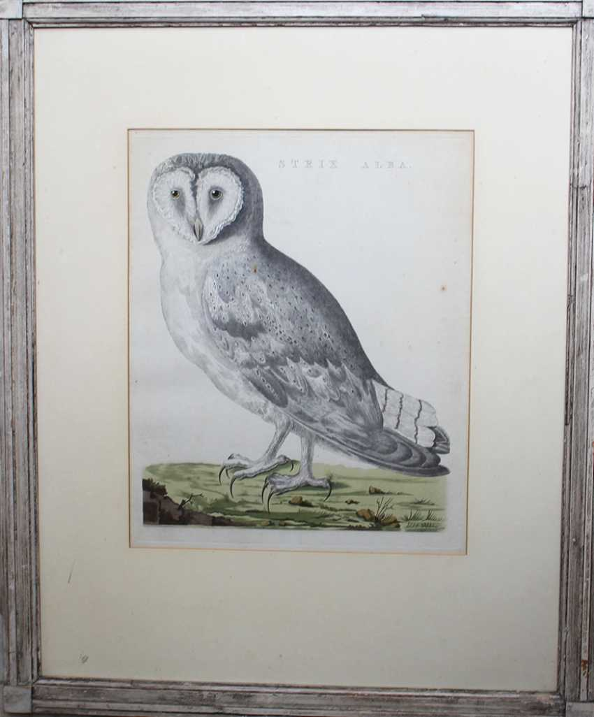 Ornithological Copper Print - photo 1