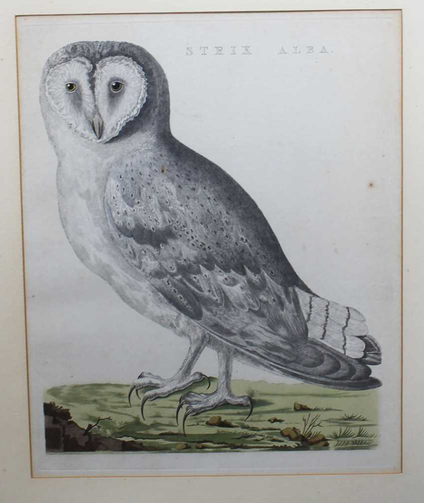 Ornithological Copper Print - photo 2